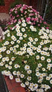 三月の花2